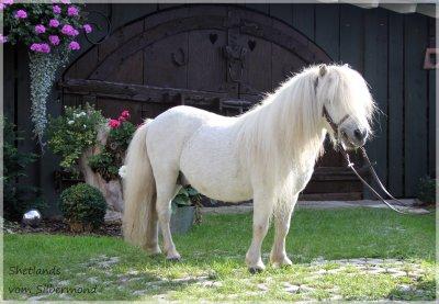 Pony kaufen baden württemberg